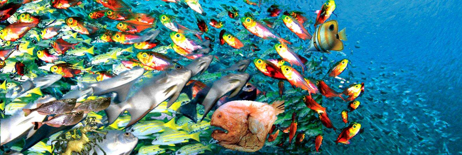 fish-populations-1580x530