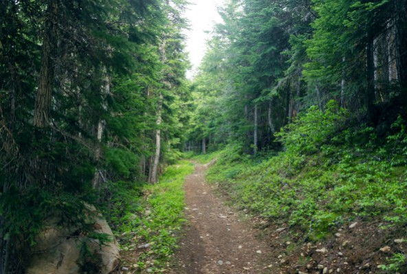 evergreen forest This is the evergreen forest quiet, peaceful, serene that is until bert raccoon wakes up luckily, he has some good friends to help him out life would be simple in the forest except for.